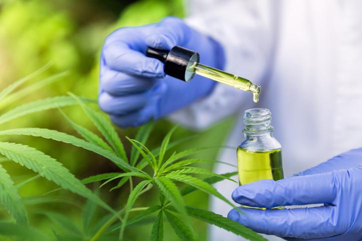 Die Blätter der Cannabis-Pflanze neben Händen mit Gummihandschuhen, die Öl in eine Pipettenflasche träufeln. Thema: CBD-Wirkung