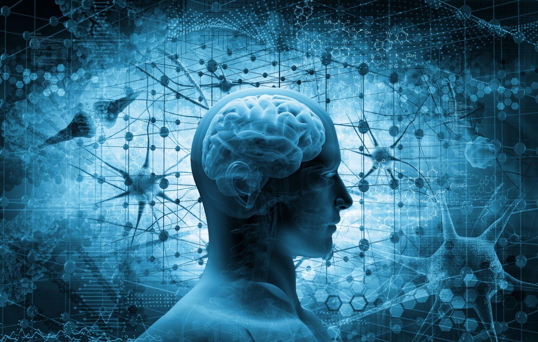 Kopf mit schematischer Darstellung des Gehirns. Thema: Neurologische Forschung